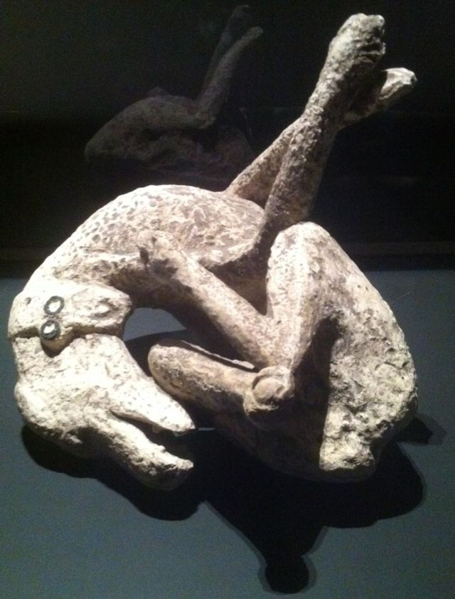 Plaster cast of a dog from Pompeii, Royal Ontario Museum